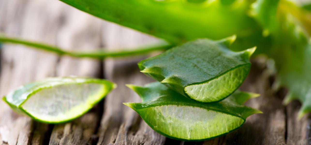 L'Aloe Vera. Benefici e il suo impiego nei Massaggi