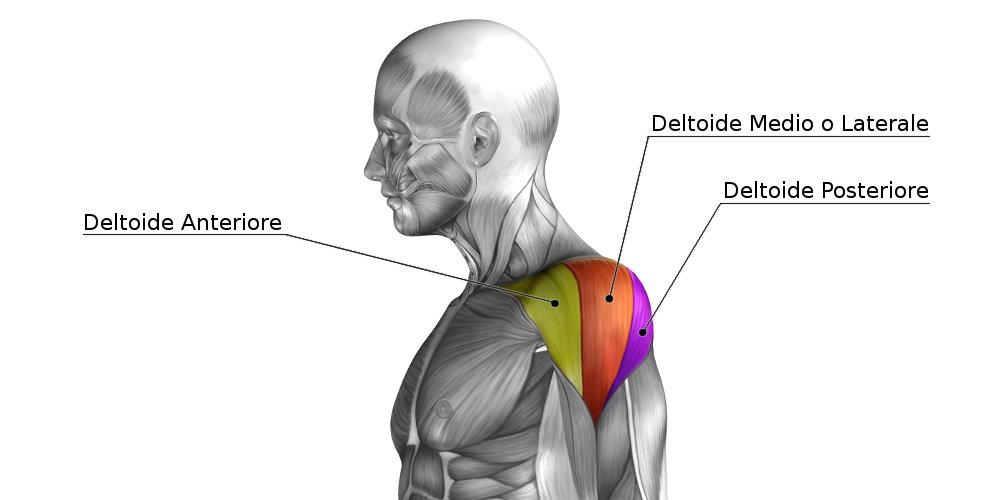 Muscolo deltoide: come allenarlo efficacemente.